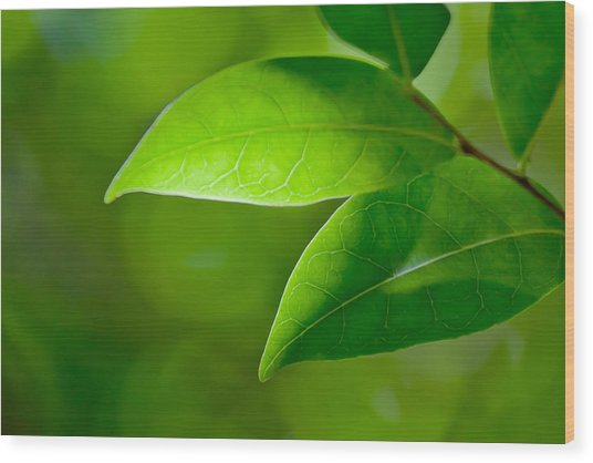Leaves Of Green Wood Print