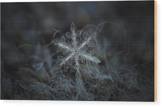 Leaves Of Ice, Panoramic Version Wood Print