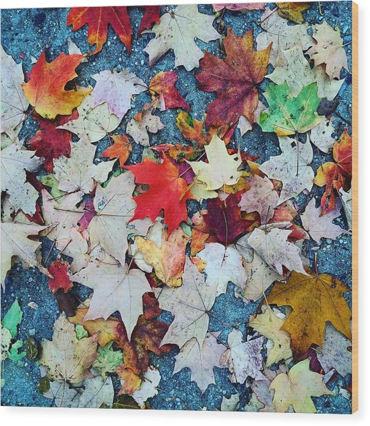 Leaves On The Sidewalk Wood Print by Robert Nguyen