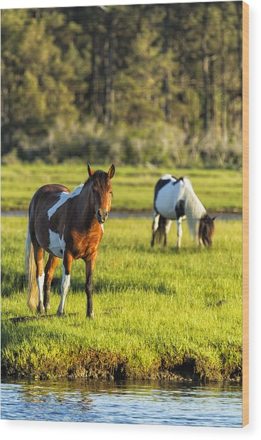 Leaving The Chincoteague Ponies Wood Print