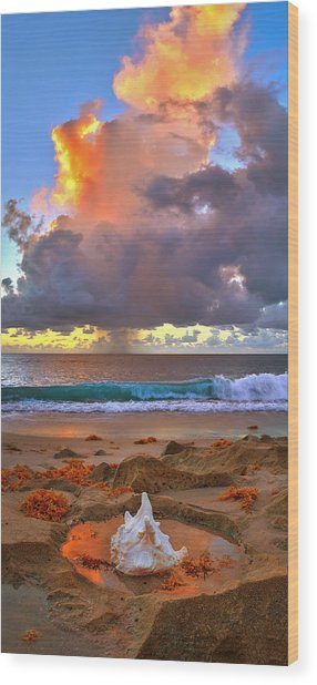 Left Behind - From Singer Island Florida. Wood Print