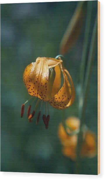 Leopard Lilly Wood Print by Chris Gudger