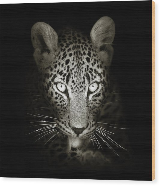 Leopard Portrait In The Dark Wood Print