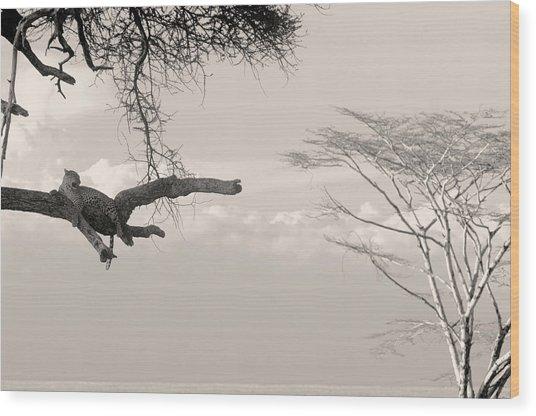 Leopard Resting On A Tree Wood Print