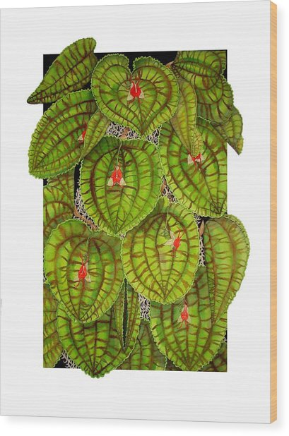 Lepanthes Calodictyon Wood Print by Darren James Sturrock