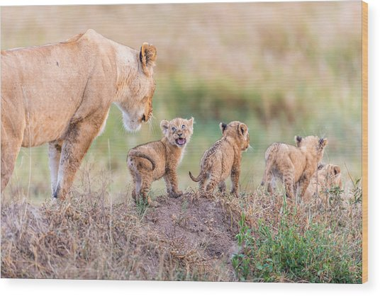 Let's Go Mom Wood Print by Ted Taylor