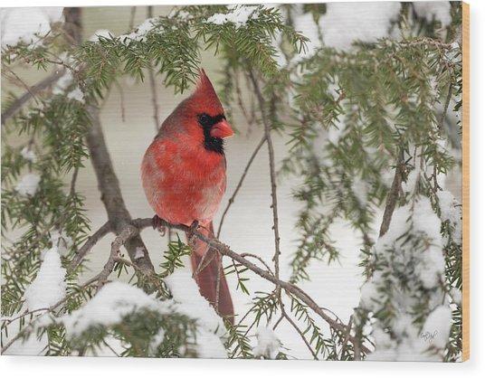 Leucistic Northern Cardinal Wood Print
