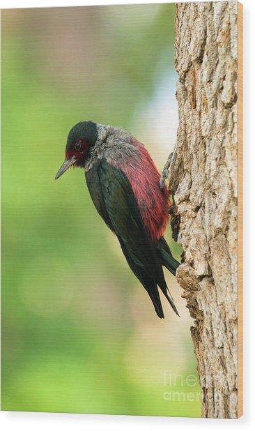 Lewis Woodpecker Wood Print