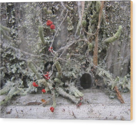Lichen And Old Fence #1 Wood Print