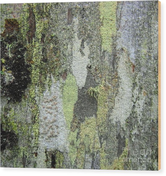 Lichen And Old Fence #5 Wood Print