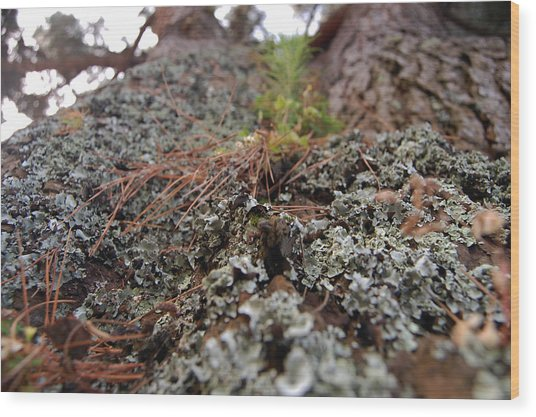 Lichen Tower Wood Print by Jean Booth