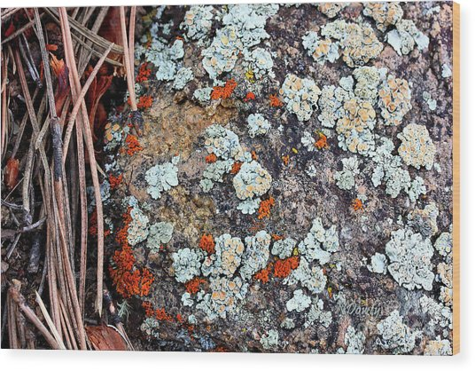 Lichen With Pine Wood Print