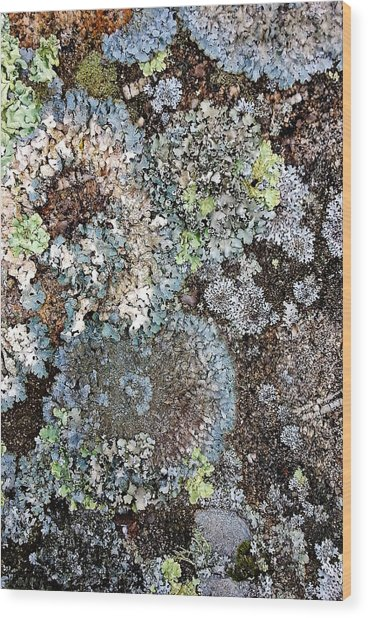 Wood Print featuring the digital art Lichens by Julian Perry