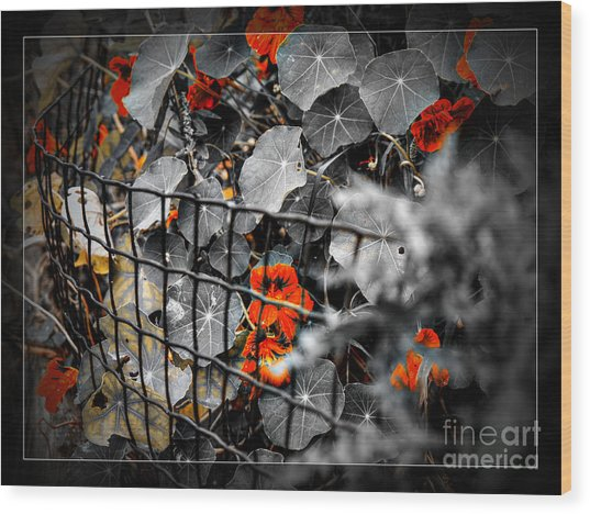 Life Behind The Wire Wood Print