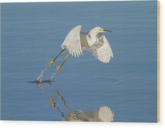 Lift Off- Snowy Egret Wood Print