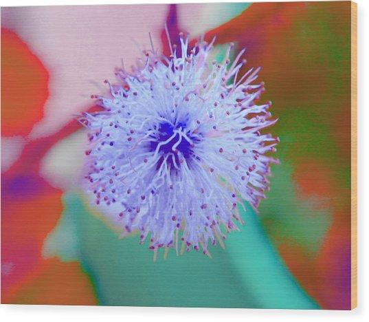 Light Blue Puff Explosion Wood Print