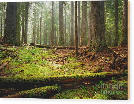 Light In The Forest Wood Print