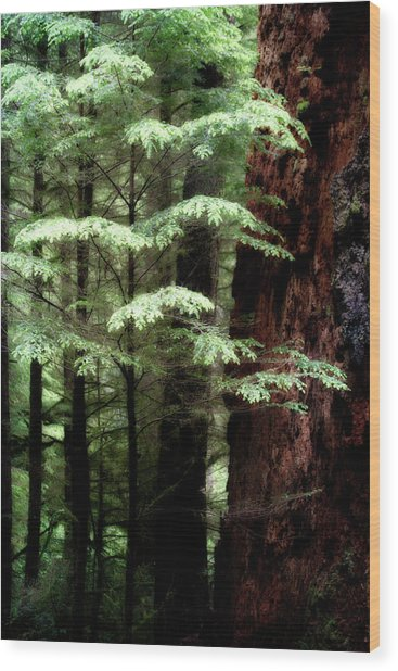 Light On Trees Wood Print
