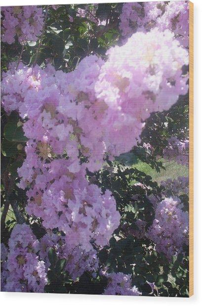 Light Purple Crape Myrtle Flowers Wood Print by Warren Thompson