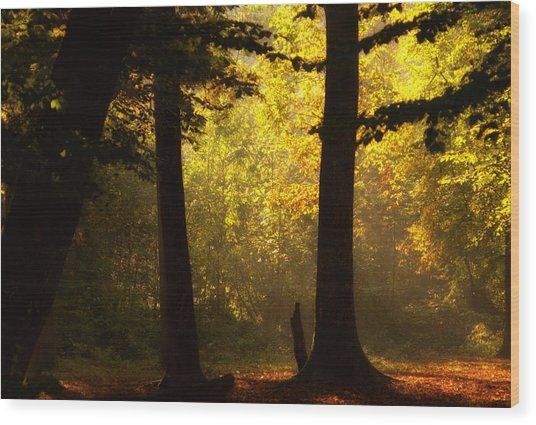 Light Wood Print by Svetlana Peric