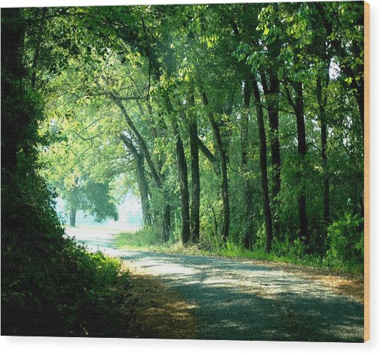 Lighted Path Wood Print by Lynn Reid