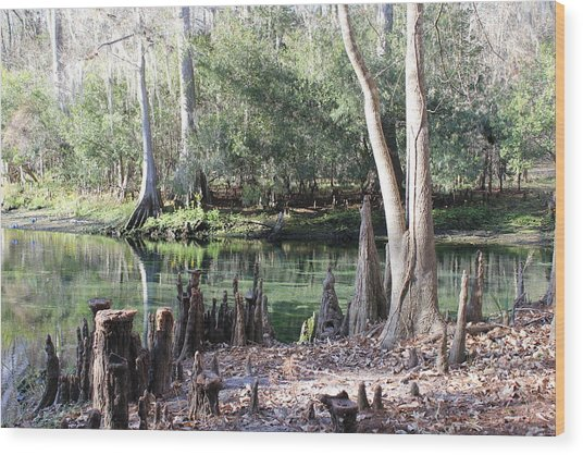 Lighted Springs Wood Print by Michelle Barone