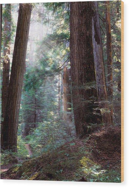 Lighting The Path Wood Print by Leland D Howard
