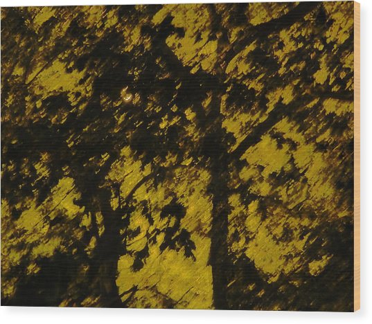 Lighttthru Forest Wood Print by Florene Welebny