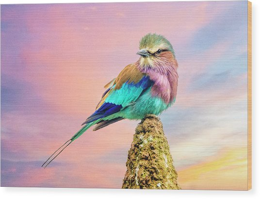 Lilac Breasted Roller At Sunset Wood Print