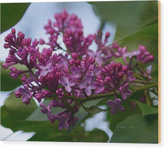 Lilac Buds Wood Print