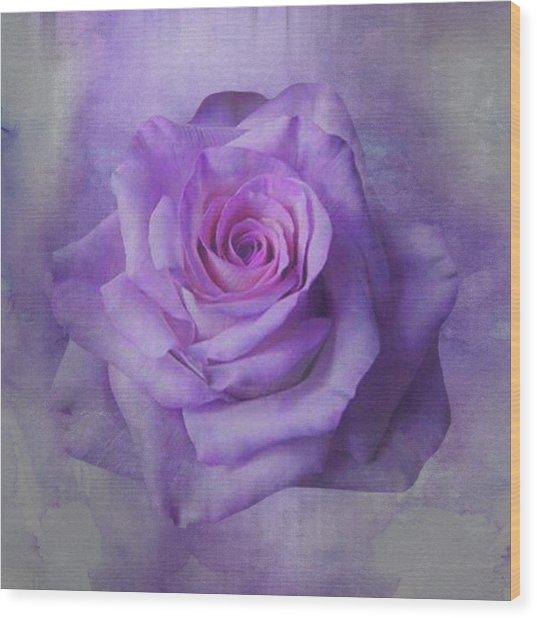 Lilac Purple Rose Wood Print