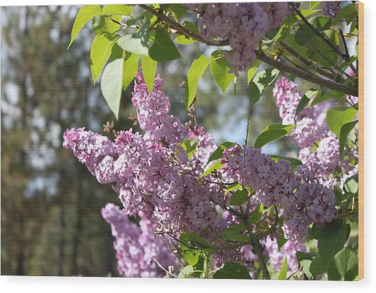 Wood Print featuring the photograph Lilacs 5545 by Antonio Romero