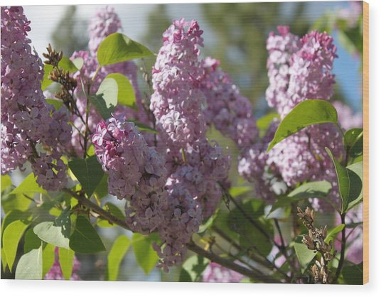 Wood Print featuring the photograph Lilacs 5548 by Antonio Romero