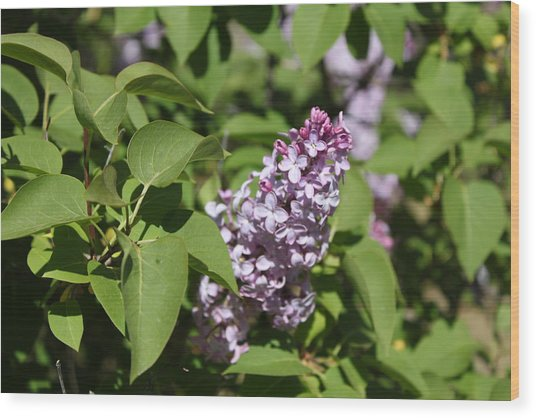 Wood Print featuring the photograph Lilacs 5551 by Antonio Romero