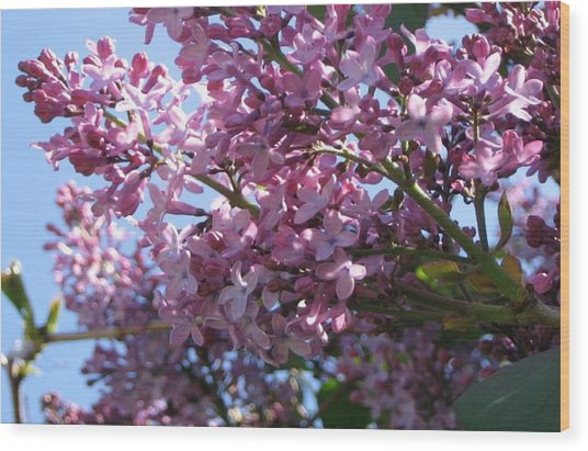 Lilacs In Bloom 2 Wood Print