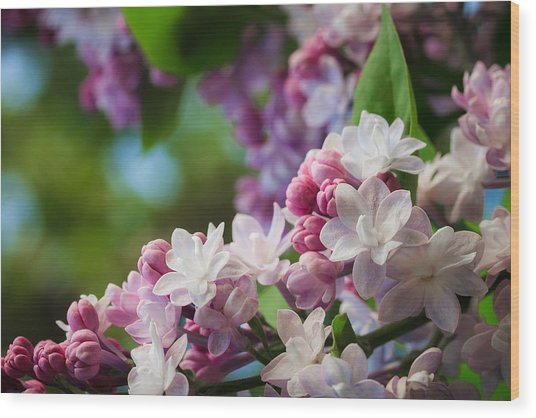 Lilacs Of Spring Wood Print