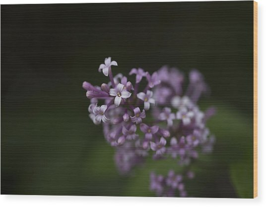 Lilacs2 Wood Print by Liz Howerton