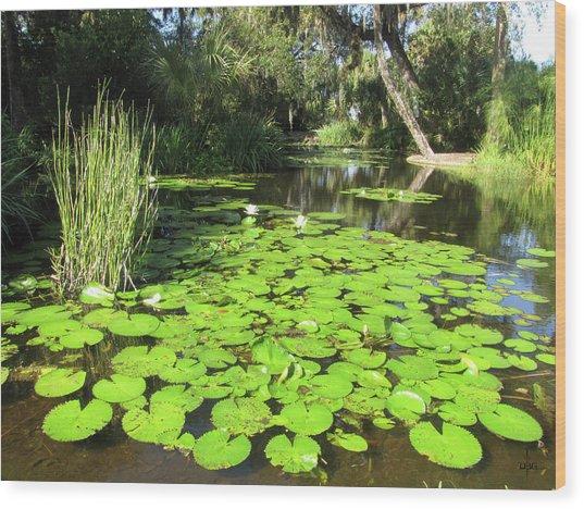 Lilies Of Bok Gardens Wood Print