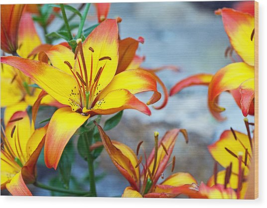 Lilies Of The Field #1 Wood Print