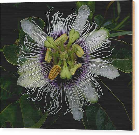 Lilikoi Passion Fruit Wood Print
