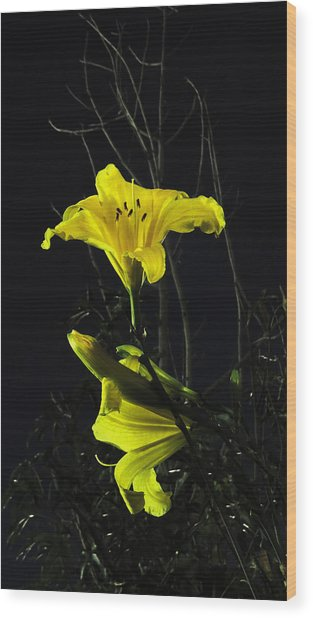 Lilly In The Evening Wood Print