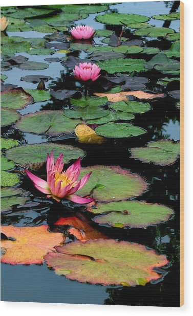 Lilly Pads Wood Print