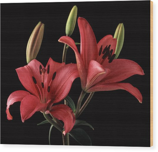Lily 9 Wood Print by Joseph Gerges