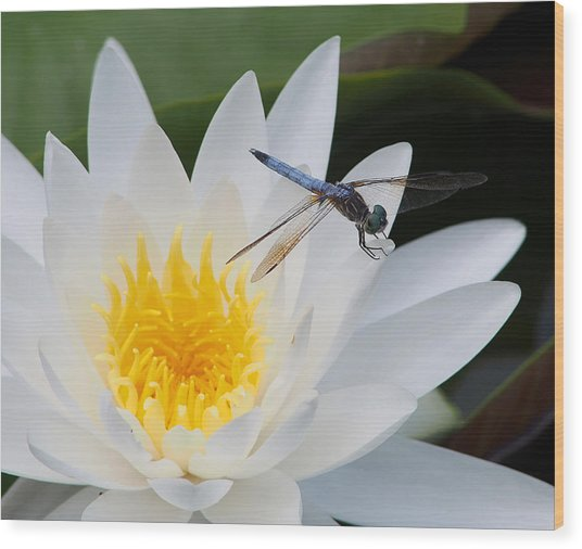 Lily And Dragonfly Wood Print