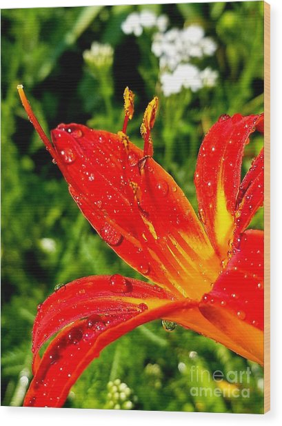 Lily And Raindrops Wood Print