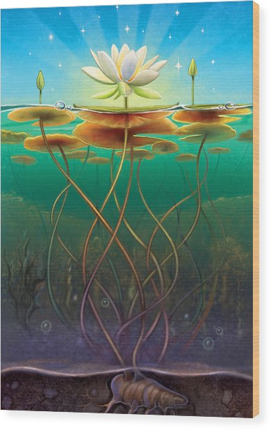 Water Lily - Transmute Wood Print
