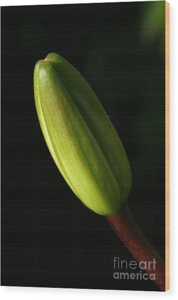 Lily Bud Wood Print