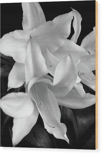 Lily Flowers Black And White Wood Print