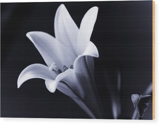 Lily In Black And White Wood Print