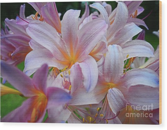 Lily Lavender Closeup Wood Print